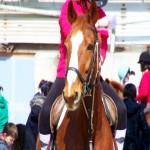 Chartresequitation cavalerie netomitone