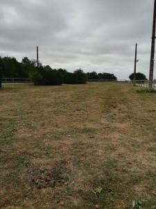 paddock en herbe 1